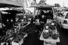 Flower seller (Hugh Baystanley) Tags: flowers winter monochrome auckland takapuna bwblackandwhite flowerseller outdoormarket