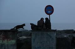 Kara kedi (| ozgur |) Tags: black love digital cat canon turkey blackcat landscape photography turkiye streetphotography istanbul kedi digitalphotography tabela çöp 60d canon60d
