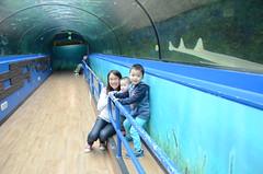 Liam, Isaac, Julia in the shark tank at Sydney Aquarium (avlxyz) Tags: aquarium sydney australia sydneyaquarium fb5