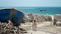 She's Wild (MMUUU) Tags: ocean china sea wild dog island fishing nikon village sunny fujian    d800