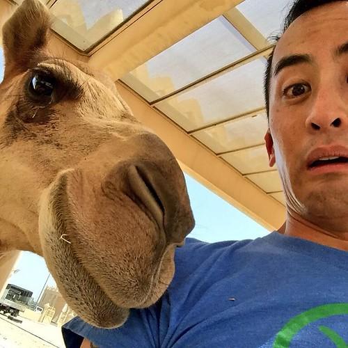 Camel farm scaredy-cat selfie