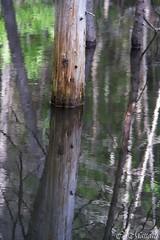 568-Promised Land (clamato39) Tags: water plante eau upsidedown reflet relection miroir paysage extrieur arbre fort
