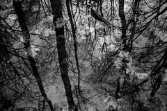 Bosco d'inchiostro (luca.cadez) Tags: autunno boschi