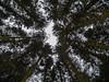 DSCN2789 (alanmcclurg) Tags: aberfoyle lochard walks