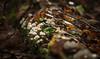 Not mush-room to grow (Kiwi Tom) Tags: mushroom nature hiking walk funghi forest tomhall landscape woodland wood