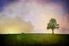 Alone (Ania Kanabaj) Tags: mazury poland alone autumn birds clouds colorful d800e endless field fineart grass green krajobraz landscape morning painting sky tree