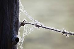 Frosty Fence Post (nehad1) Tags: zaunpfahl raureif winter fence zaun