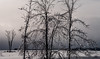 glittering trees (marianna_a.) Tags: mirabel ice tree trees winter landscape wonderland quebec canada mariannaarmata