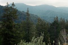 (Casey Lombardo) Tags: fuji fujifilm fujicolor fujicolor400h fujipro400h minoltasrt101 film filmphotography filmscans ishootfilm analog marin sananselmoca sananselmo landscape landscapes pines pine trees hills hillside mist misty
