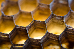 297/366 - Turns out wasps are good for something (Spannarama) Tags: 366 october waspnest waspsnest honeycomb hexagons hexagonal glowing backlit golden macro closeup
