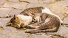 Sweet dreams (GC - Photography) Tags: gato cat calle street gcphotography morocco marruecos meknés mequinez kittens