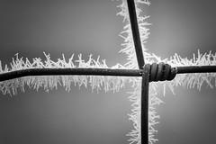 Twisted. (Dikke Biggie.) Tags: 52in2017 26twist twist twisted gedraaid happyfencedfriday hff fence fenced fencing fencedfriday hek hekwerk omheining friday vrijdag wire steelwire draad staaldraad ice icecrystal frozen frosty ijs bevroren line lines lijn lijnen closeup detail macro 100mm f28 canon canoneos450d dof depthoffield scherptediepte bokeh blackandwhite bw black white zwartwit zw zwart wit monochrome monochroom canonnl dgawc