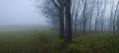 Niebla azul (una cierta mirada) Tags: fog foggy mist nature forest woods winter trees branches green blue explore
