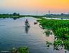 Incredible bengal (Arka Misra) Tags: incredible bengal