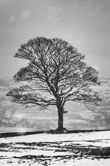 Hard Times (aevo69) Tags: andy evans andyevanscreations lone tree snow blizzard storm black white bw high contrast peak district