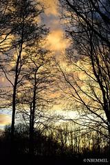 Sundown through the trees (Niels van Bemmel) Tags: sunset sundown tree trees forrest collors clouds winter flevoland woods thenetherlands nederland holland bos wolken kleuren bomen nikond5300 afs55300