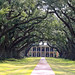 The live oak trees lining the walkway to Oak Alley Plantation