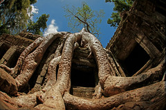 East Gate (PaparazSea.com) Tags: cambodia roots tombraider eastgate overrun templeofdoom jungletemple placetovisit