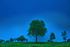 walnut tree blue hour (Andres Franz Gessl) Tags: blue sky tree green nature krone walnut gras bluehour hdr treetop nussbaum