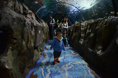 Liam in the shark tank, Isaac, Julia, at Sydney Aquarium (avlxyz) Tags: aquarium sydney australia sydneyaquarium fb5