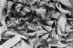 _DSC0080 (Cristo Bolaos) Tags: blackandwhite verde 35mm d76 f90 fomapan100 fomapan filmisnotdead nikonf90 film:iso=80 fomafomapan100 film:brand=foma film:name=fomafomapan100 filmdev:recipe=10253