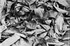 _DSC0080 (Cristo Bolaños) Tags: blackandwhite verde 35mm d76 f90 fomapan100 fomapan filmisnotdead nikonf90 film:iso=80 fomafomapan100 film:brand=foma film:name=fomafomapan100 filmdev:recipe=10253