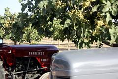 IMG_0366 (ACATCT) Tags: old españa tractor spain traktor agosto toledo antiguo massey pistacho tembleque barreiros 2015 bustards perdices liebres avutardas ff30ds r350s