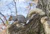 _DSC4620 (purin_cess) Tags: centralpark 2016 autumn 11月 十一月 秋 中央公園 紐約 ny newyork