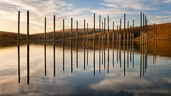 Greyton Dam Pole Dancing (Panorama Paul) Tags: paulbruinsphotography wwwpaulbruinscoza southafrica westerncape greyton overberg farmdam poles reflections streakyclouds sunset nikond800 nikkorlenses nikfilters