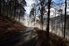 ...quand le brouillard stagne au fond de vallée (Excalibur67) Tags: nikon d750 sigma globalvision 24105f4dgoshsma paysage landscape forest foréts brume mist brouillard arbres trees mountain montagne vosgesdunord