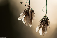 (KellieFiste) Tags: trees winter dark lig sun bright shadows sticks canont6