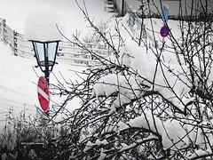 Schnee (aNNa schramm) Tags: schnee eisundschnee schneelandschaft laternen schilder verkehrsschilder winter wintertime winterlandschaft bäume zaun zäune wirrwarr outdoor