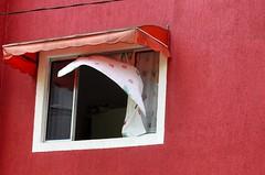 Por Aí-Cor-Diadema. (nariobarbosa) Tags: porai cor art estetica rua street diadema saopaulo brasil brazilian