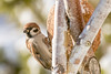 Thank you for feeding! (w.lichtmagie) Tags: tiere vogel vogelhaus winter tamron 70300 usd ngc