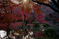 Pond and autumn (tez-guitar) Tags: pond water reflection autumn autum 紅葉 autumn leaves fall tree trees forest wood maple pentax pentaxart kyoto japan
