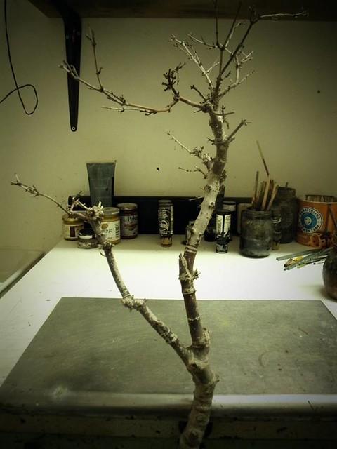 01 Prendiamo un tronco