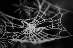 230117 Gut vernetzt_4 (Werner D.) Tags: olympusomd olympus45mm18 nature natur macro makro monday bokeh outdoor schwarzweis bw