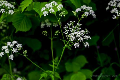 23052015_nature_printemps_07