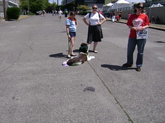 Fremont Solstice fair  DOG PARADE.    121 (Hmm.....) Tags: cola seattlewa dogparade fremontsolsticefair citizensforoffleaseareas
