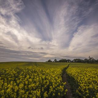 A Path Through Yellow