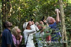 Search for the birds of paradise (10b travelling / Carsten ten Brink) Tags: 10btravelling 2013 asia asie asien carstentenbrink eastsepik genericplaces hunstein iptcbasic indonesia neuguinea newguinea nuigini otherkeywords png pacific papua papuanewguinea papuan range southpacific unesco wagu wasui wildlifemanagementarea biodiversity ecology environmental island lagoon lake rainforest tenbrink tributary peopleset melanesia oceania nouvelleguinée papouasie