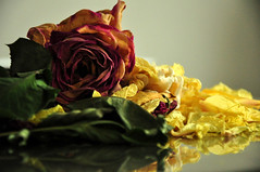 Wilted Splendor - 絢爛的枯萎 (sunflowers&bubbletea) Tags: plant flower rose petals vase dried arrangement 花朵 薔薇 玫瑰 wiltedflowers wiltedrose 花瓣 花瓶 枯萎 nikond90 乾花 sunflowersbubbletea