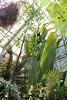 IMG_4572 (cheryl's pix) Tags: california berkeley botanicgarden botanicalgardens botanicalgarden botanicgardens berkeleyca berkeleybotanicalgarden ucbotanicalgarden universityofcaliforniabotanicalgarden universityofcaliforniabotanicalgardenatberkeley