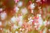 Explosive poetry (Ans van de Sluis) Tags: flower macro bokeh nature ansvandesluis poetry explosion flora floral light lights