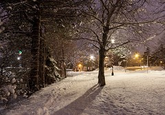 A Walk in the Park (Karen_Chappell) Tags: park bowringpark winter january snow trees tree cold christmas holiday lights stjohns newfoundland nfld canada atlanticcanada avalonpeninsula night evening nature branches scenery scenic landscape