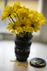 Just Some Yellow Flowers (WilliamND4) Tags: yellow flowers vase nikon d810 50mm