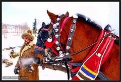 It was a very cold day... (dariusz_lipinski) Tags: horse horses frost snow winter village beauty pferd pferde schnee dorf schönheit kůň koně mráz sníh zima vesnice krása cheval les chevaux gel neige hiver beauté cavallo cavalli brina la neve inverno villaggio bellezza лошадь лошади мороз снег зима деревня красота