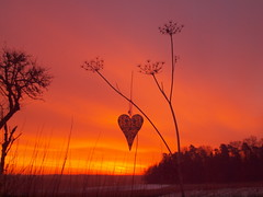 DISCOVER THE LOVE TO YOUR HOME P1283000 (hlh 1960) Tags: nature natur landschaft landscape himmel sky red rot love liebe amore herz heart winter schnee snow trees bäume emotion morning farben colours germany home heimat weg wald forrest silhouette