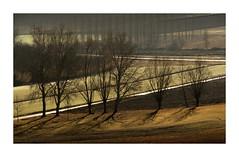 Shadows on the fields (GP Camera) Tags: nikond7100 nikonafsdx55300mmf4556gedvr landscape paesaggio countryside campagna trees alberi trunks tronchi branches rami fields campi grass erba roads strade backlight controluce light luce shadows ombre lightandshadows lucieombre lighteffects effettidiluce textures trame winter inverno allaperto geometries geometrie silence silenzio calm calma quiet quiete vignetting depthoffield profonditàdicampo whiteframe cornicebianca italy italia piemonte monferrato darktable gimp opensource freesoftware softwarelibero digitalprocessing elaborazionedigitale