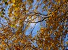 Autumn (kjaergaardphotos) Tags: autumn garden tree leafs sky colours